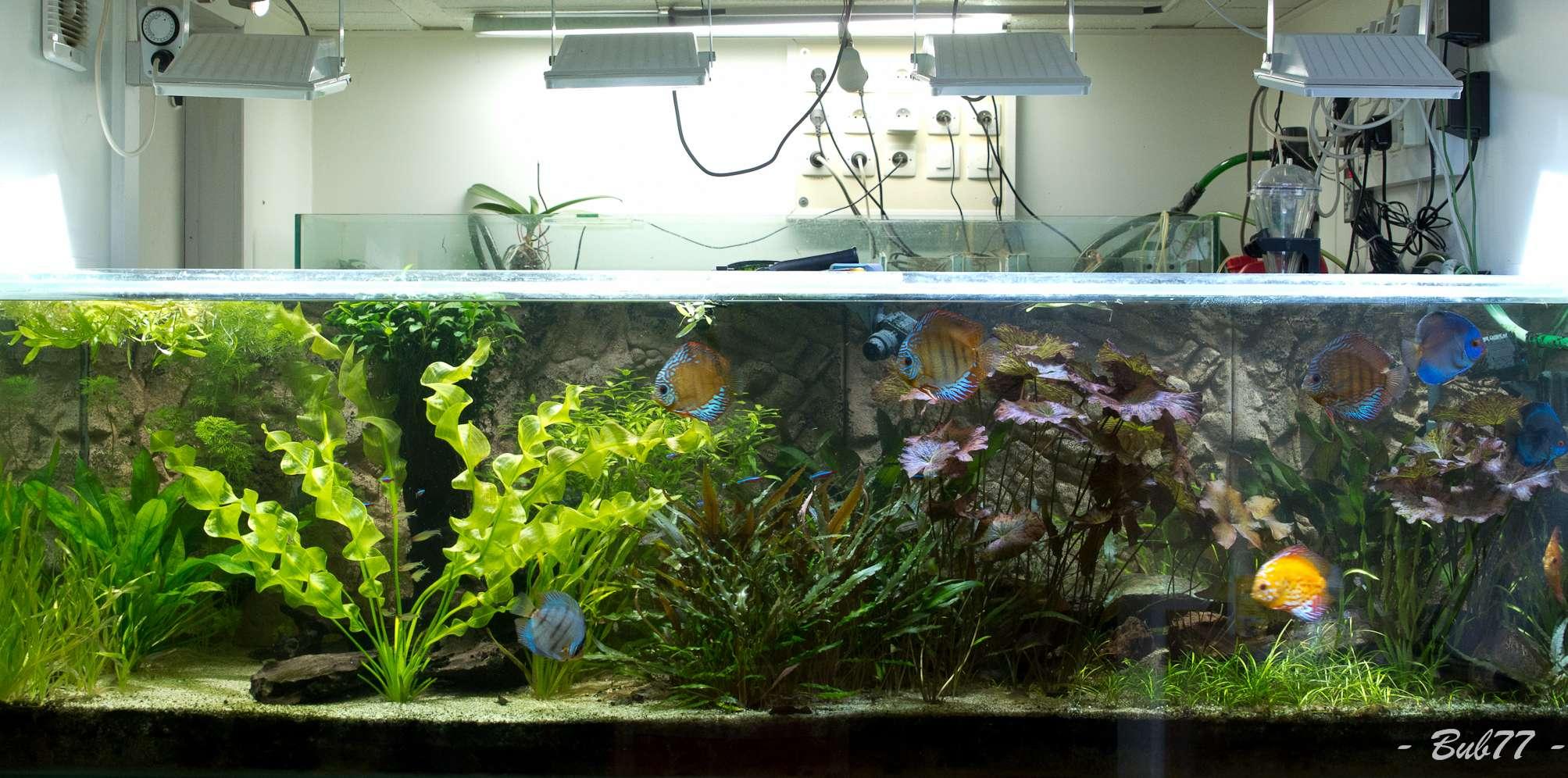 1000l sal de bub77 mon projet mon bac et moi cap r cifal for Exemple de decoration aquarium